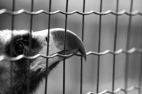 1-11-14 Caged