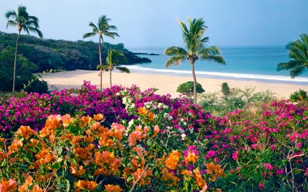 flowers ocean