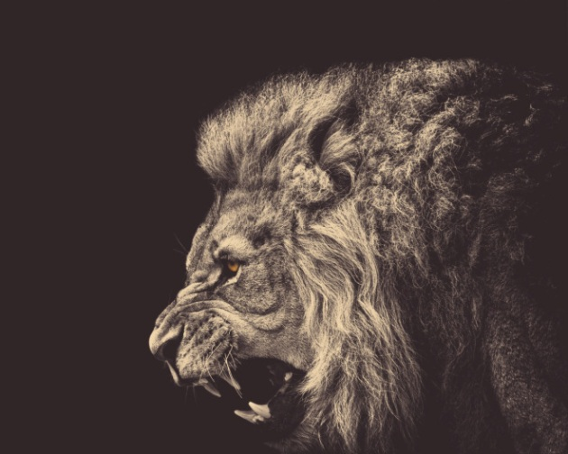 angry-male-lion-1280x1024