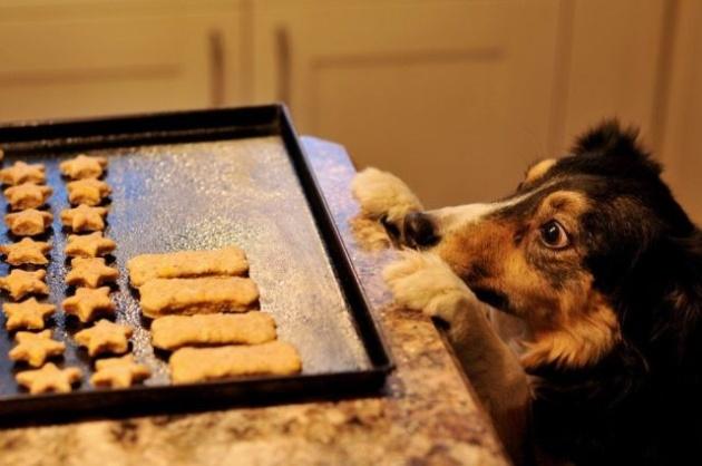 temptation dog